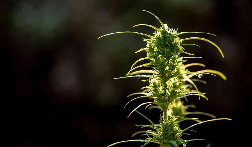 Абстинентный синдром марихуана лечение от наркомании самара